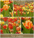 Tulip Sunshine by KBritt