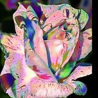 A Rare Rose .. iphone case by LoneAngel