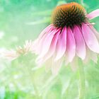 Echinacea by Diane Johnson-Mosley