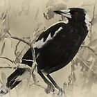 Magpie by Kris Montgomery