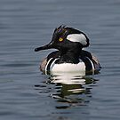 Hooded Merganser by Jim Cumming