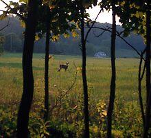 Deer in the trees by Chris  Hayworth