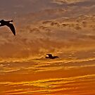 seagulls at sunset by EGGY6198