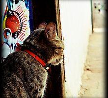 Cat by Helkramu