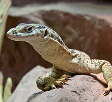 Monitor lizard by Helkramu
