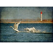 The Chase Is On Photographic Print