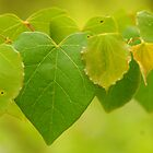 I Love The Green Of Spring! by Renee Ellis