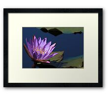 Tina Water Lily Framed Print
