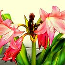 Pink Crinum Lily by Sharon Woerner