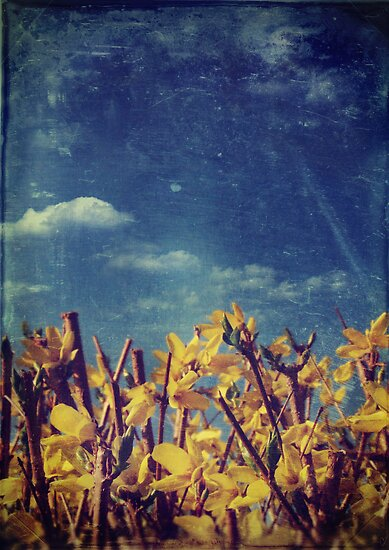 Forsythia by Sybille Sterk