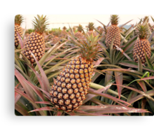 Large Pineapple Fruits Canvas Print
