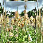 A Box of Prickles by missmoneypenny