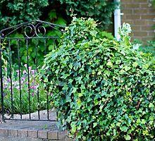 Garden Gate  by Melodee Scofield