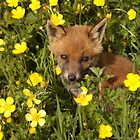 Fox Cub by AeronJohn
