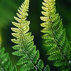 Fern. by Asher Haynes