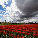 Tulip Town by Mike  Kinney
