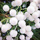 Cotton Balls  by aandm-photo
