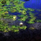 *Lily Pond Impression Painting* by Darlene Lankford Honeycutt