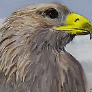 Hunter Hawk by John Ryan