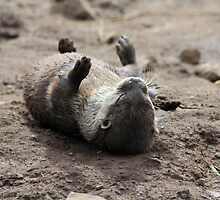Itchy Otter by dgscotland