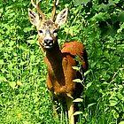 Hello Deer .........! by Roy  Massicks