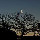Tickling the Moon Tree by Helen Vercoe