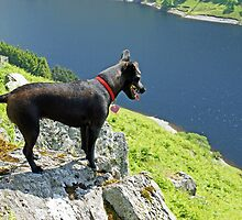 The Hound Of Haweswater by VoluntaryRanger
