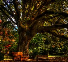 Withycombe Gardens - Mt Wilson NSW Australia by Brad Woodman