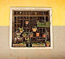 Window by Georgia Kelleher