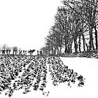 Winter Scene by Mike Crawford