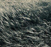 The way of the prairie wind by Mitch Labuda