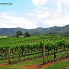 A View of the Vines - HUNTER VALLEY by CandiceRose