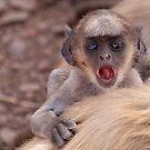 Baby Langur Monkey Ranthambore Fort by SerenaB