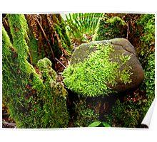 Lush Spring Moss Poster