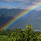 Rainbow by Alexa Clement