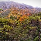 Looking up to Marion's Lookout by TonyCrehan