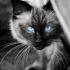 Ol Blue Eyes by Yanni