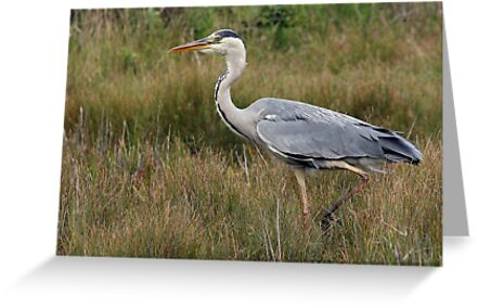 The Grey Heron by Mark Hughes