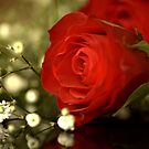 Red Rose Beauty. by Roz Cooper