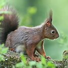 SQUIRREL DIARIES -III- by mc27