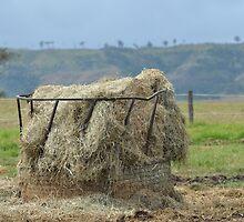 Hay Feeder by TheaShutterbug
