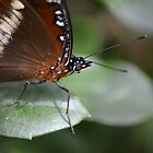 Butterfly Close Up by TheaShutterbug