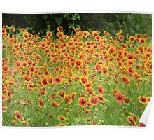 Can You Find the Little BIRD in the Flowers? Poster