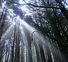 Forest At Neptune Beach, Yachats, Oregon by trueblvr
