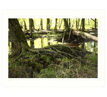 White River Marsh Landscape 6799 Art Print