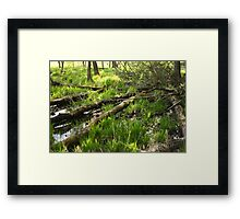 White River Landscape 6810 Framed Print