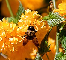 Bumble Bee by vadim19