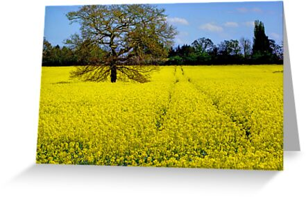 The Lone Tree by Colin J Williams Photography