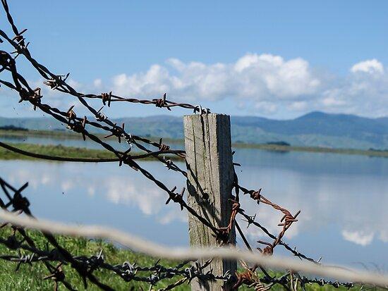 Lake Wairarapa by Anne Scantlebury