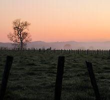 fog on the farm by Anne Scantlebury